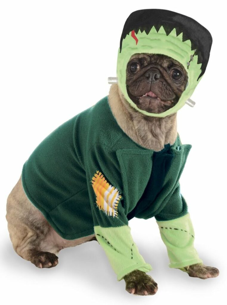 This cool Frankenstein getup makes the cutest pet Halloween costume