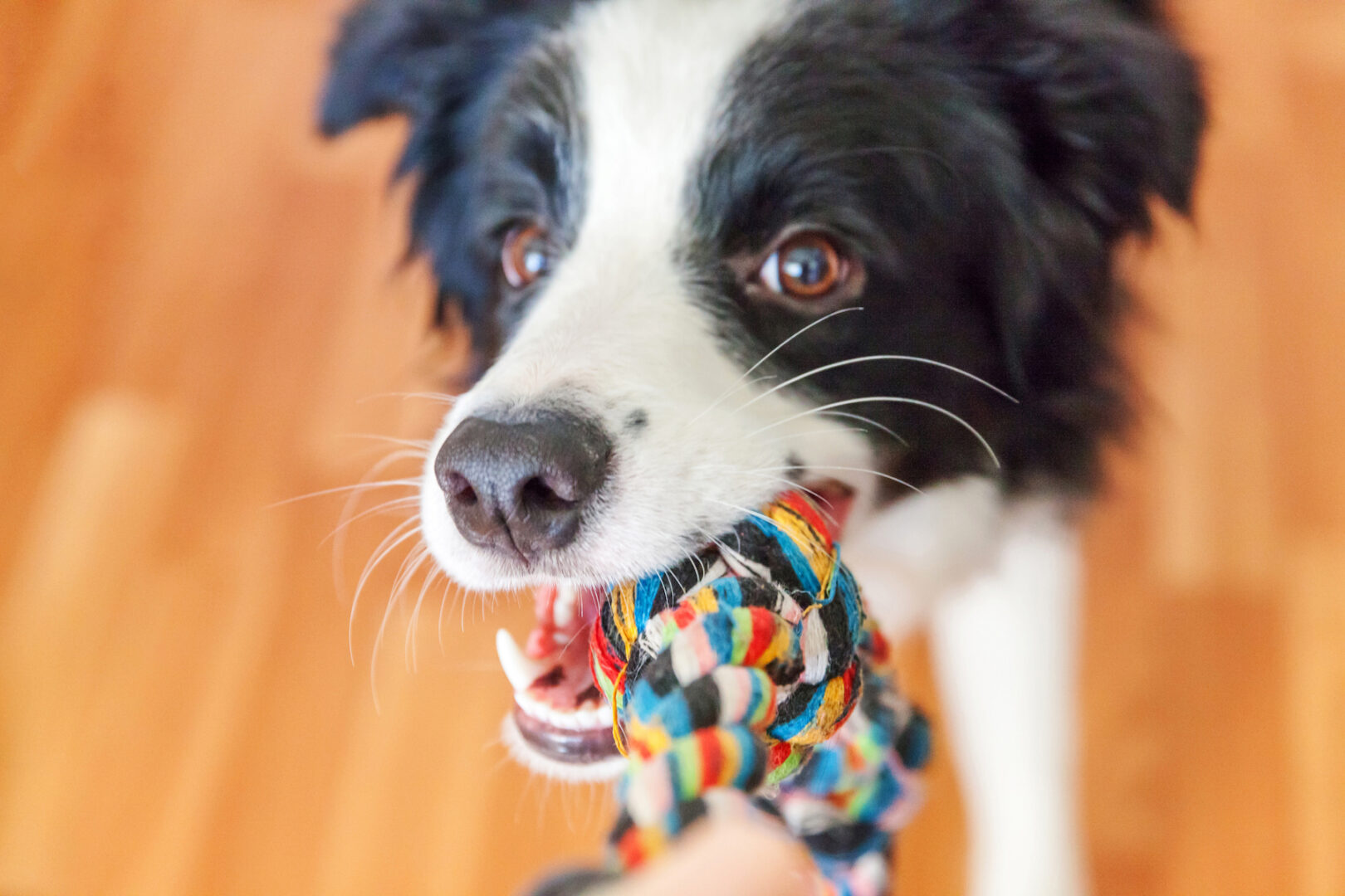 Check out these DIY dog toys you can make from things in your house