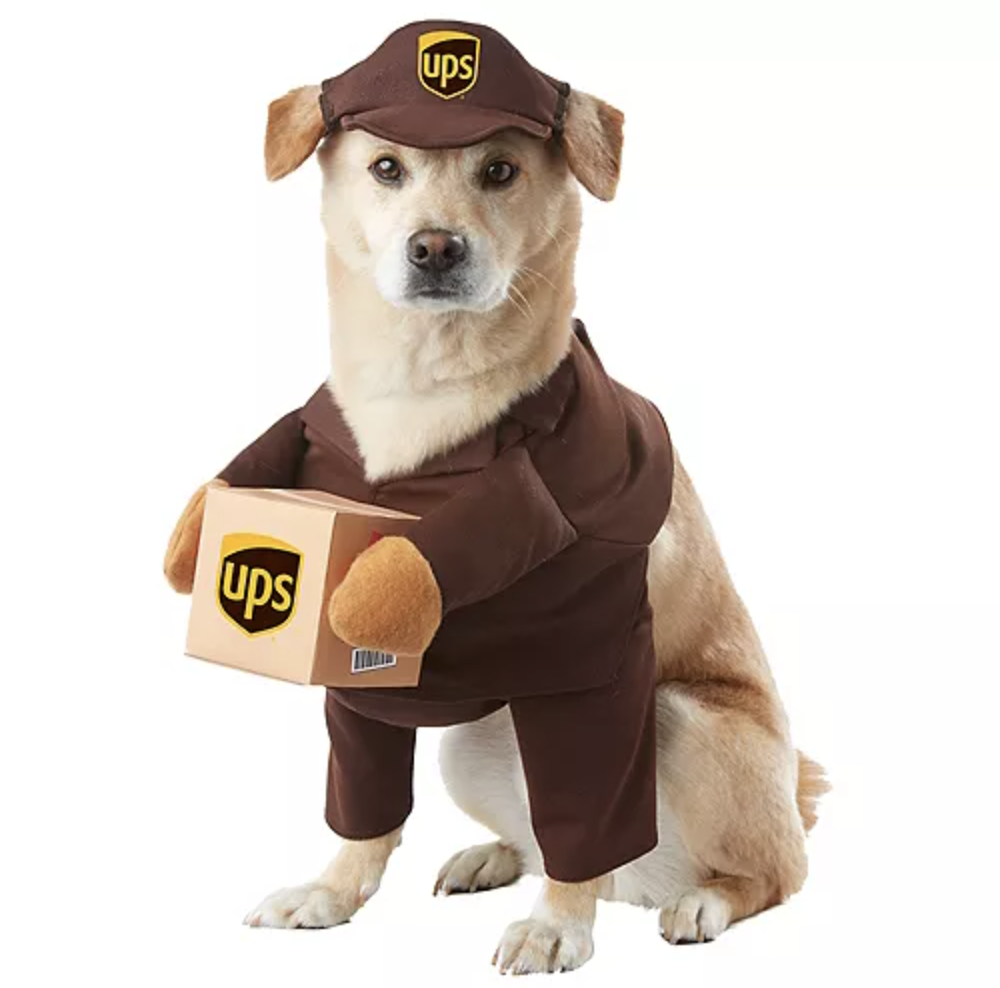 This UPS driver getup is the cutest dog costume