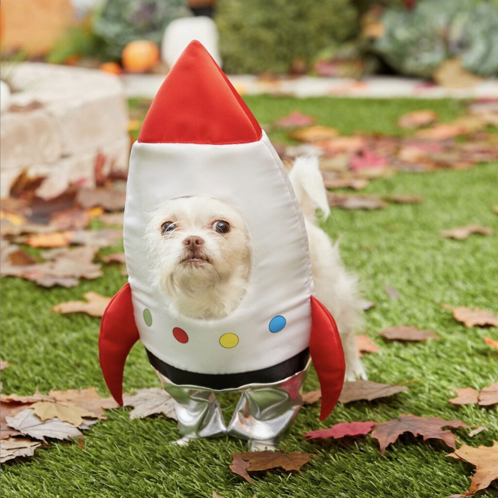 This spaceship getup is the cutest dog costume