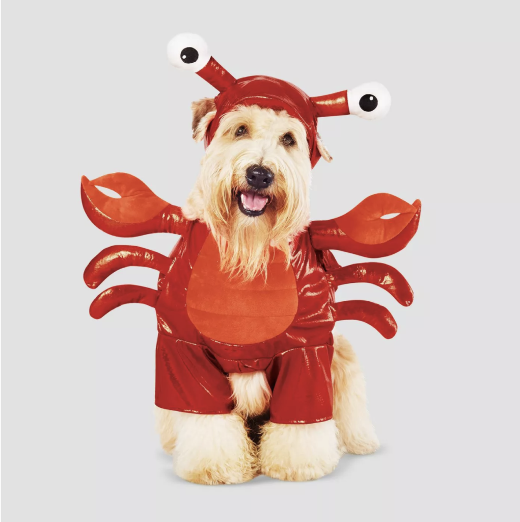 This lobster getup is the cutest dog or cat Halloween costume