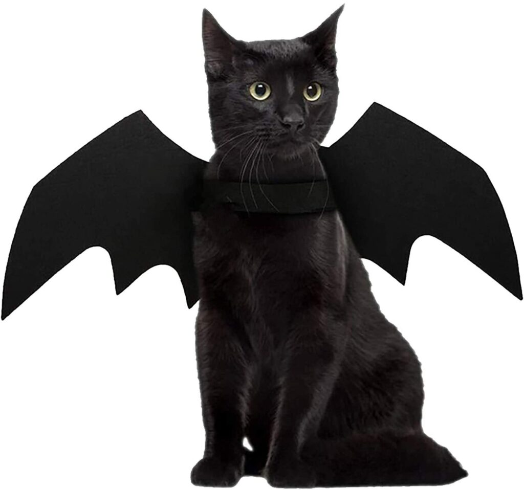 These bat wings make the cutest pet Halloween costume