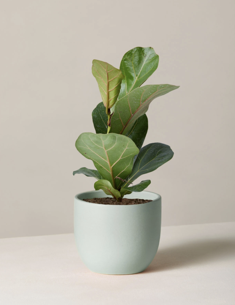 Plants are the perfect, long-lasting gift idea