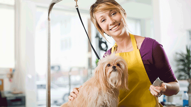 pet care business tips   care