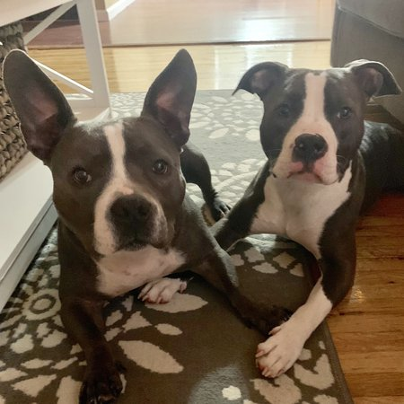 Pet Care Job in Minneapolis, MN 55403 - Sitter Needed For 2 Dogs In Minneapolis - Care.com